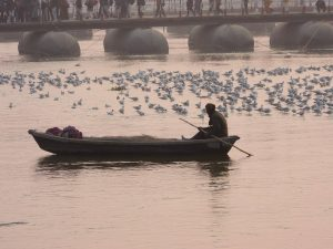 Bird Watching on Ganga