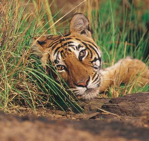 wildlife_tour_packages_in_india