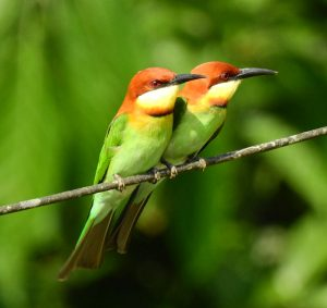 bird_watching_in_andaman