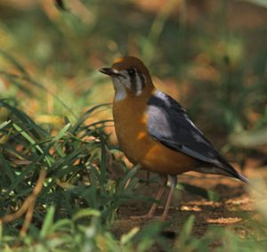 day_rate_of_pay_for_bird_watching_guide_in_india