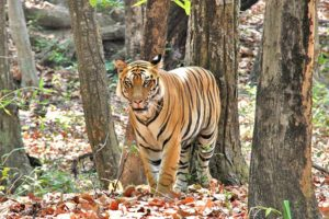 national_park_in_india