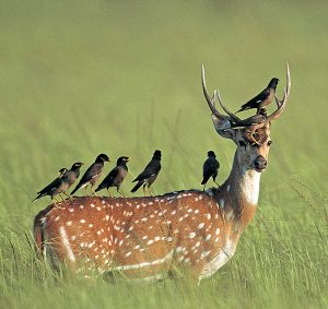deer_in_national_park