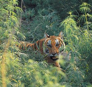 top_10_tiger_reserves_in_india