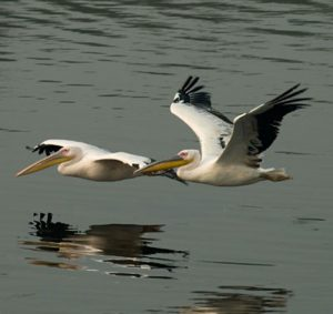 bird_watching_tours_goa