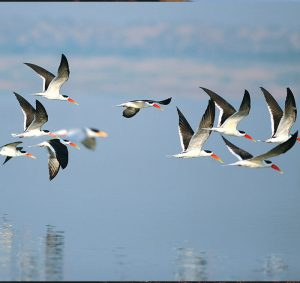 bird_watching_private_tour_india