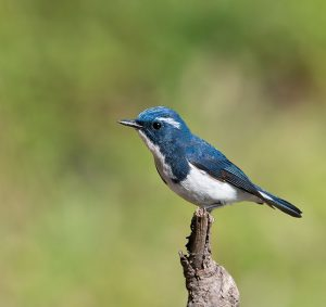 bird_watching_tours_uttarakhand