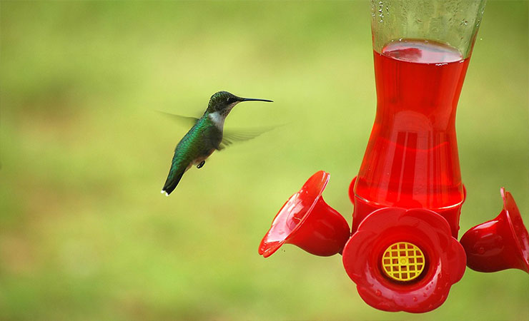 hummingbirds_tours