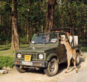 jeep_safari_national_park