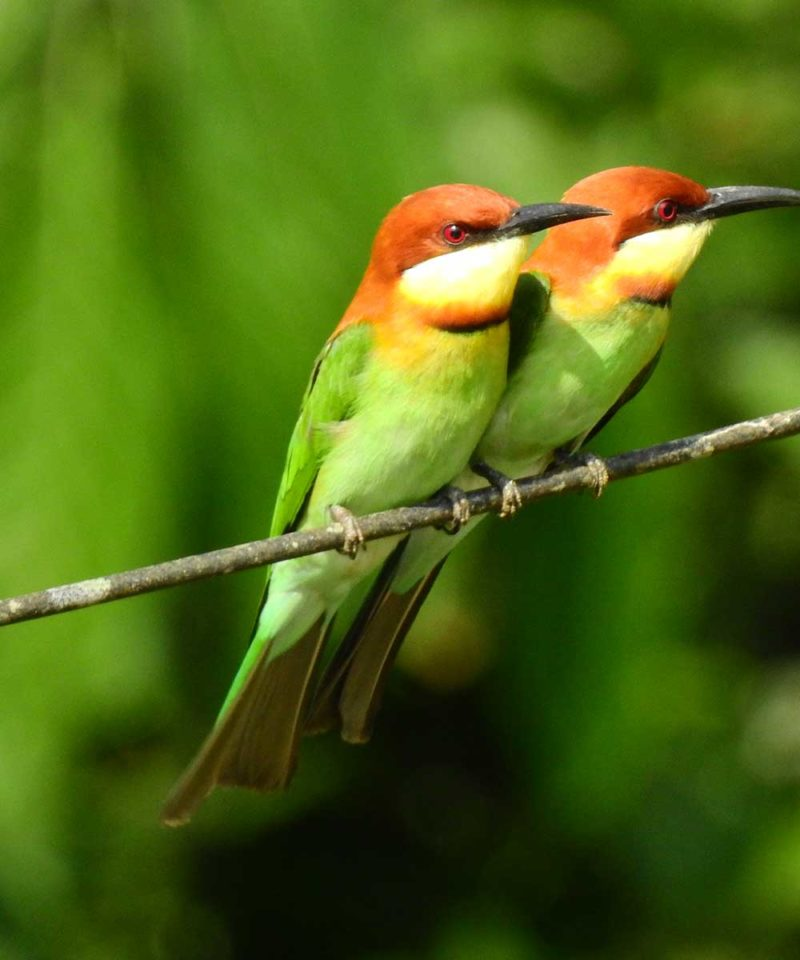 good_places_to_go_bird_watching_in_south_india