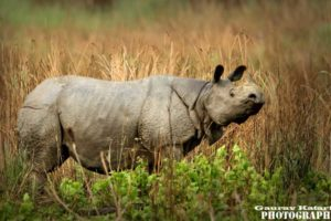 kaziranga_national_park