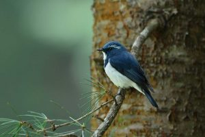north_india_bird_tours