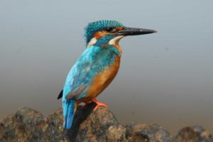 best_birding_holidays
