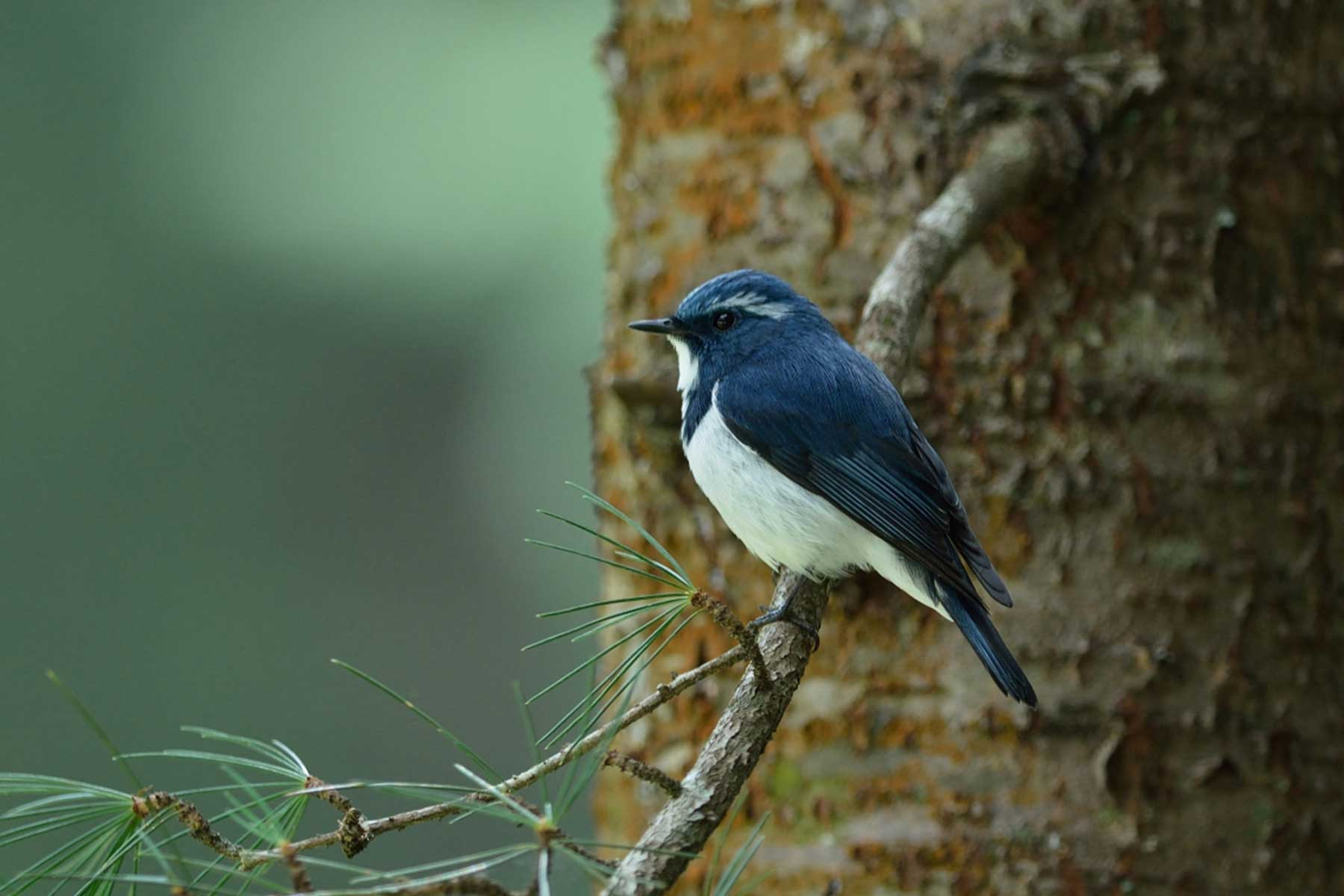 birds_of_uttarakhand