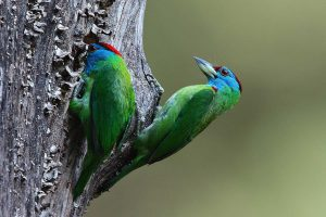 india_birding_and_natural_history_tours