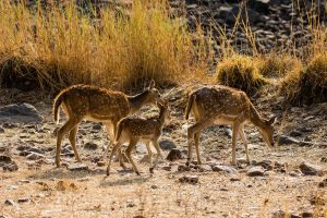 wildlife_photography_tours_in_india