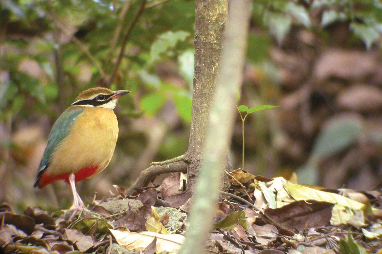 bird_watching_tours_gujarat