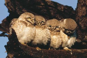 spotted_owls_tours