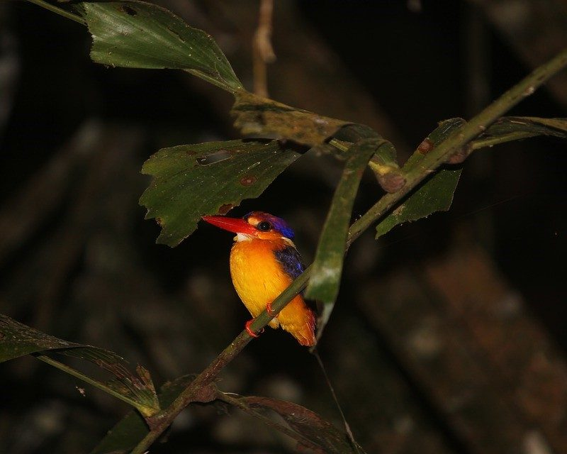 north_east_india_birding