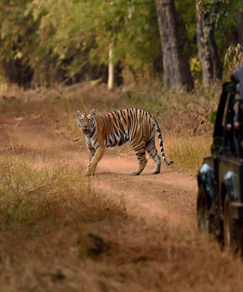ranthambore_national_park