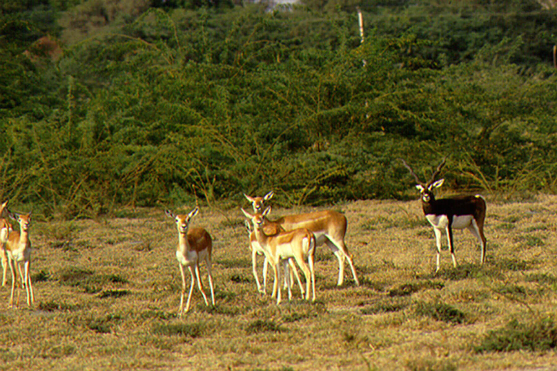 indian_wildlife_sanctuary