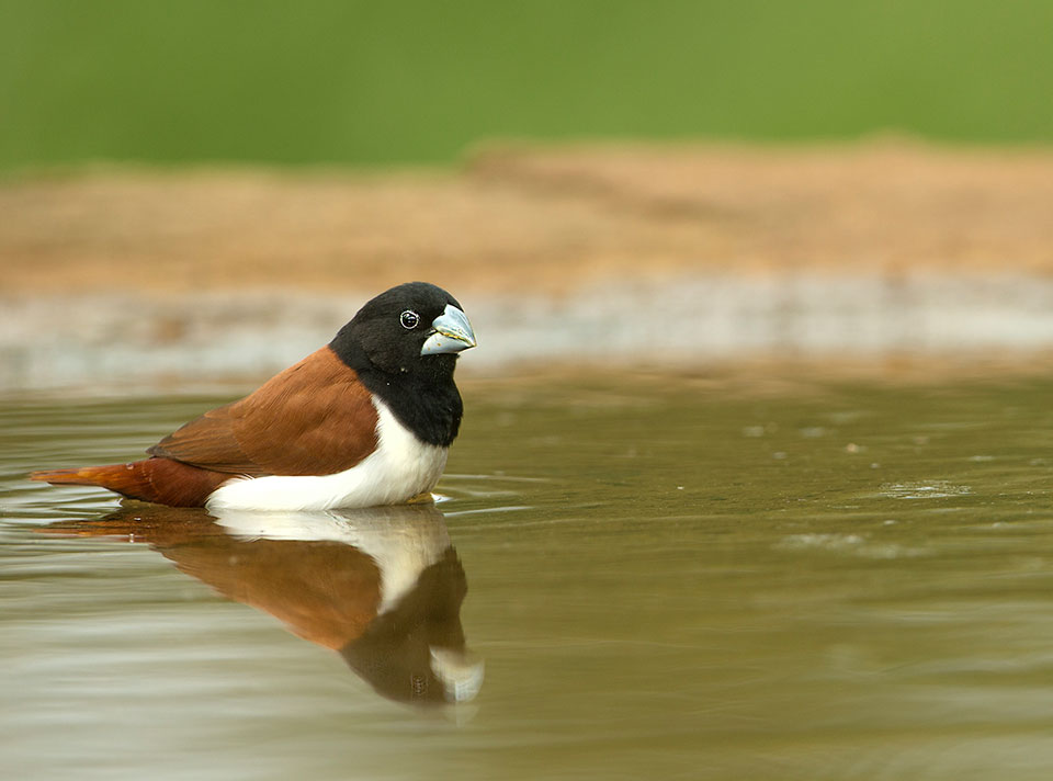 bird_watching_tours_south_india
