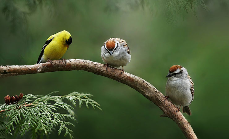 best_birdwatching_india