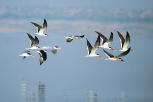 chambal_wildlife_sanctuary