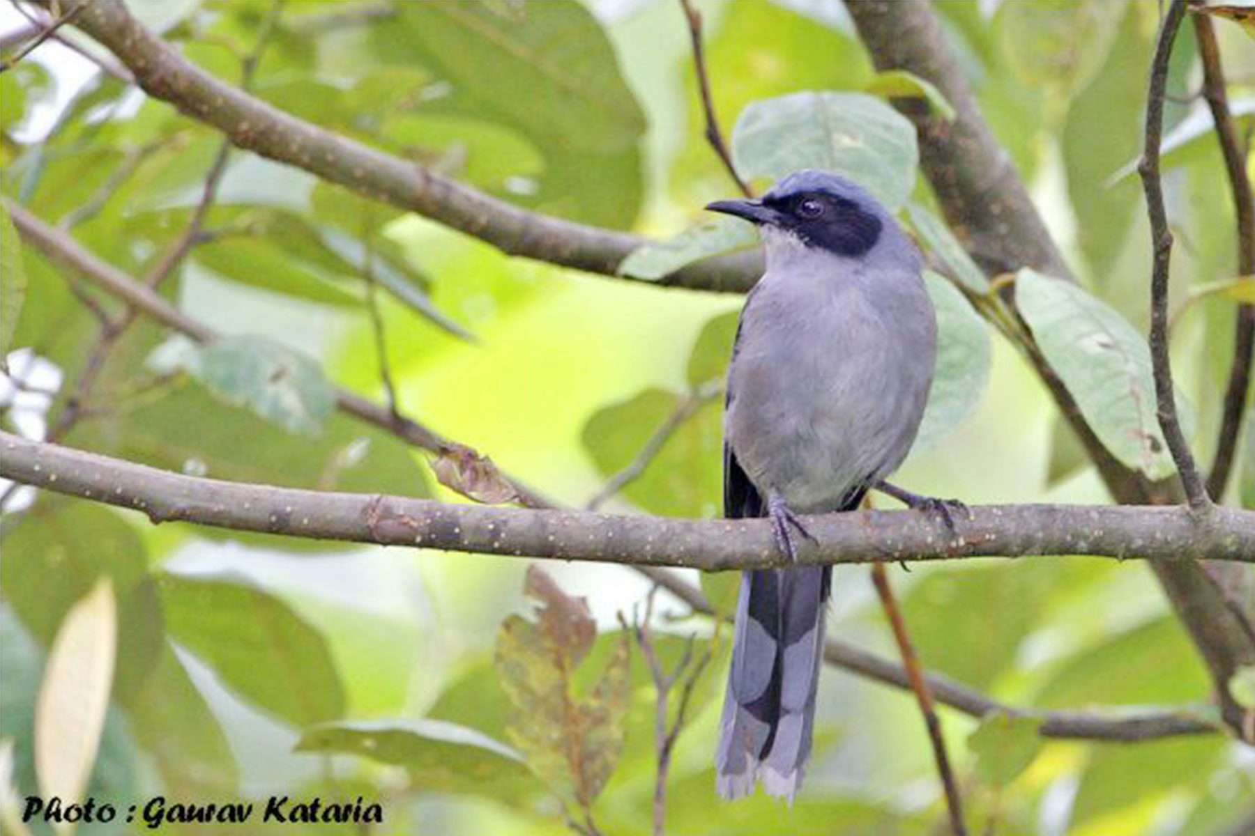10_days_in_north_india_bird_watching_and_wildlife