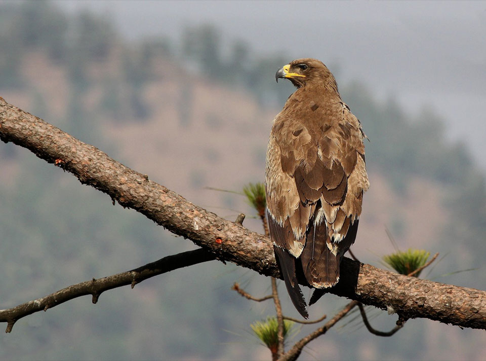 bird_watching_in_nepal