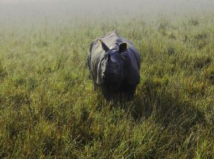 manas_national_park_famous_for_which_animal