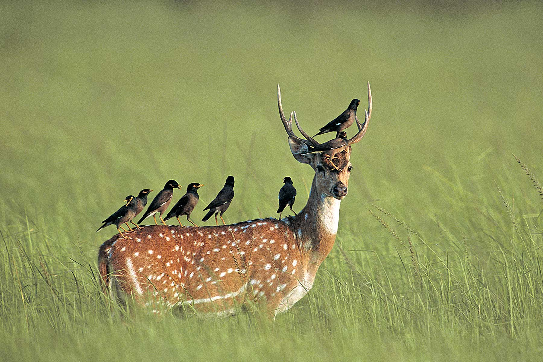wildlife_sanctuaries_in_india