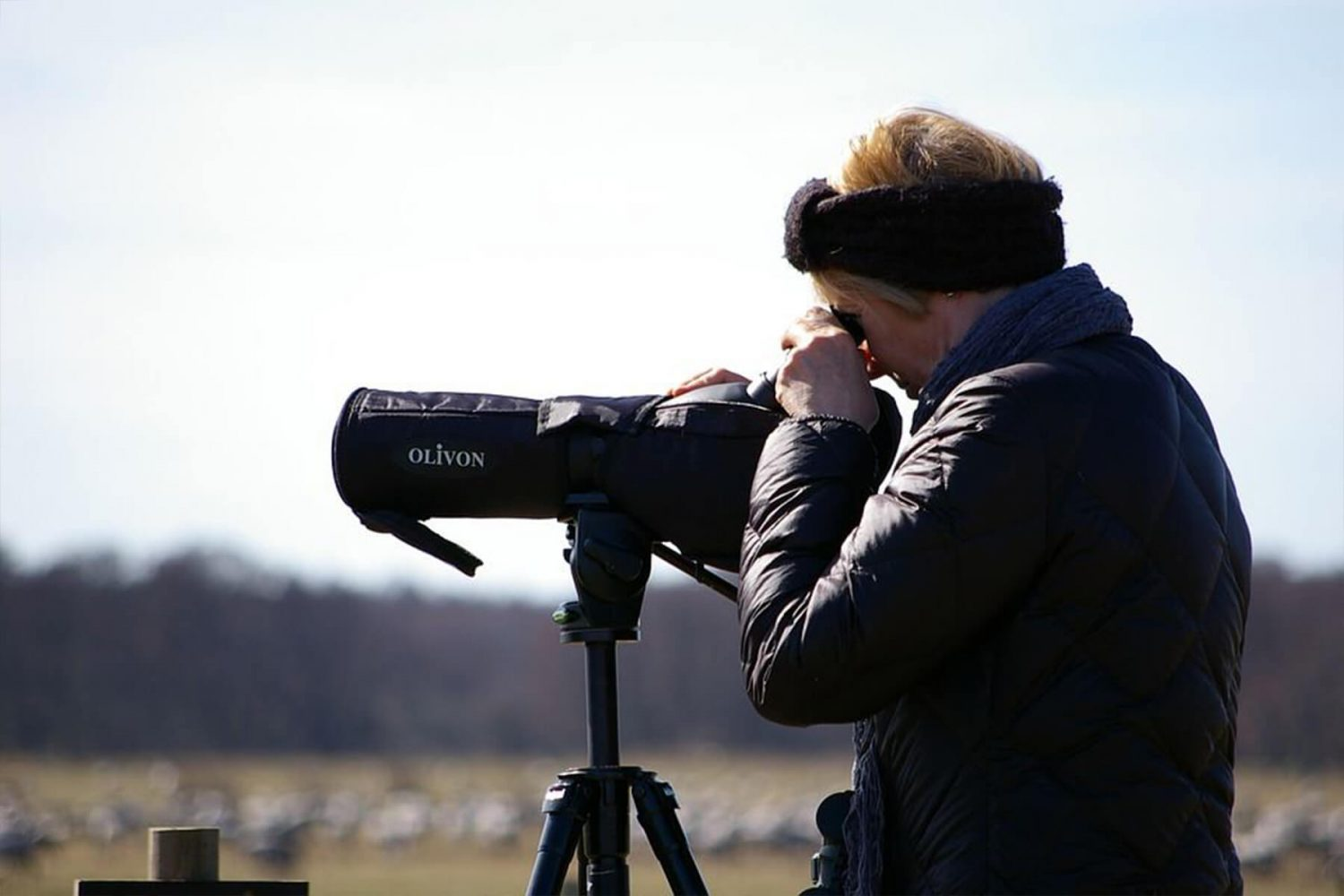 bird_watching_tours