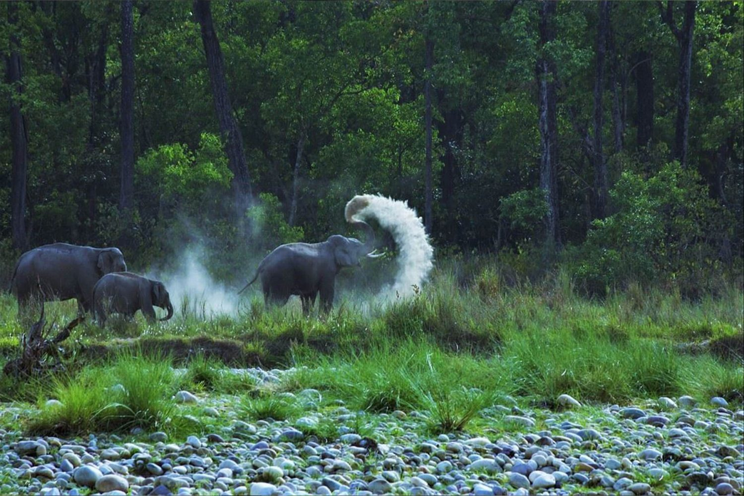 national_park_jim_corbett