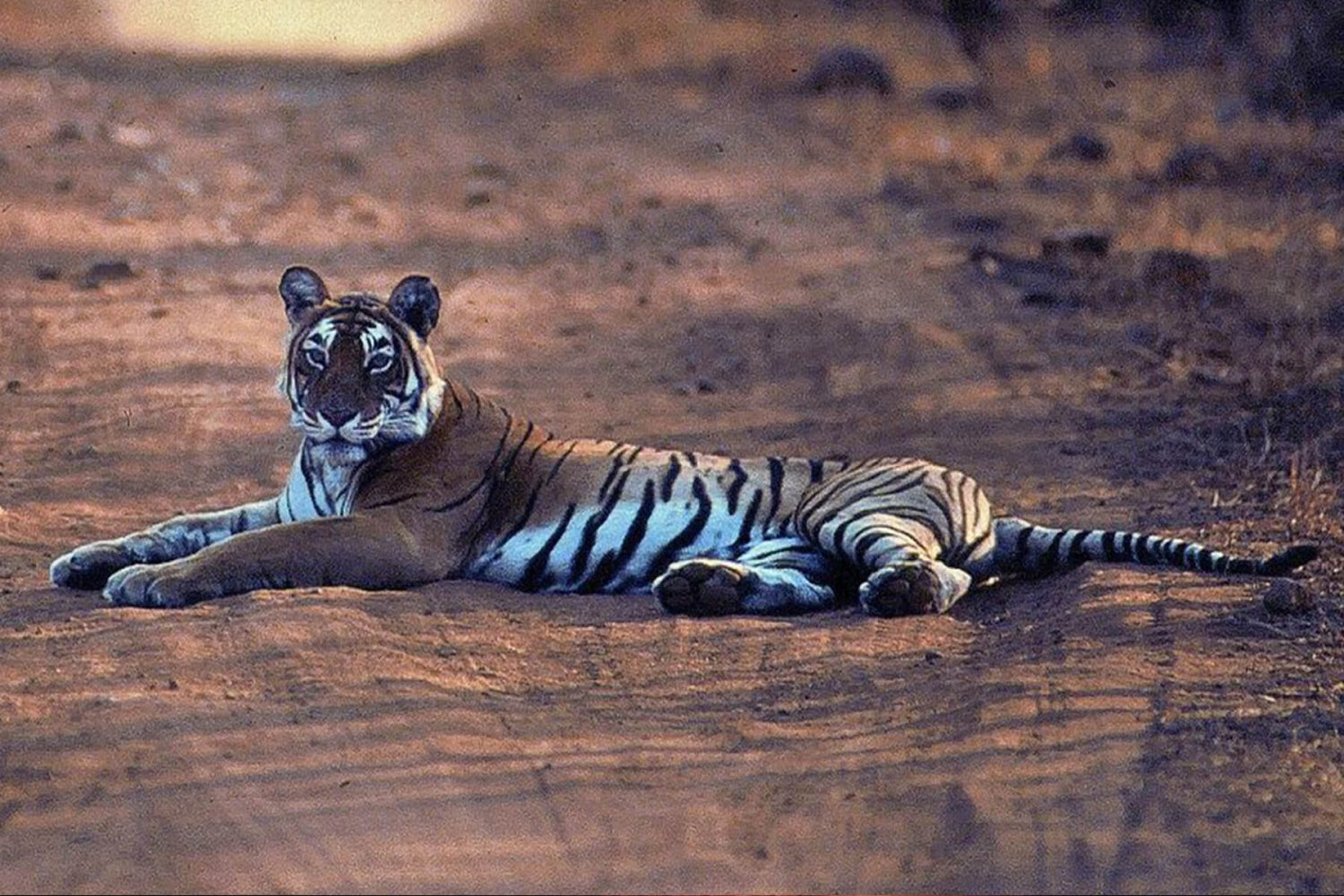 jim_corbett_national_park