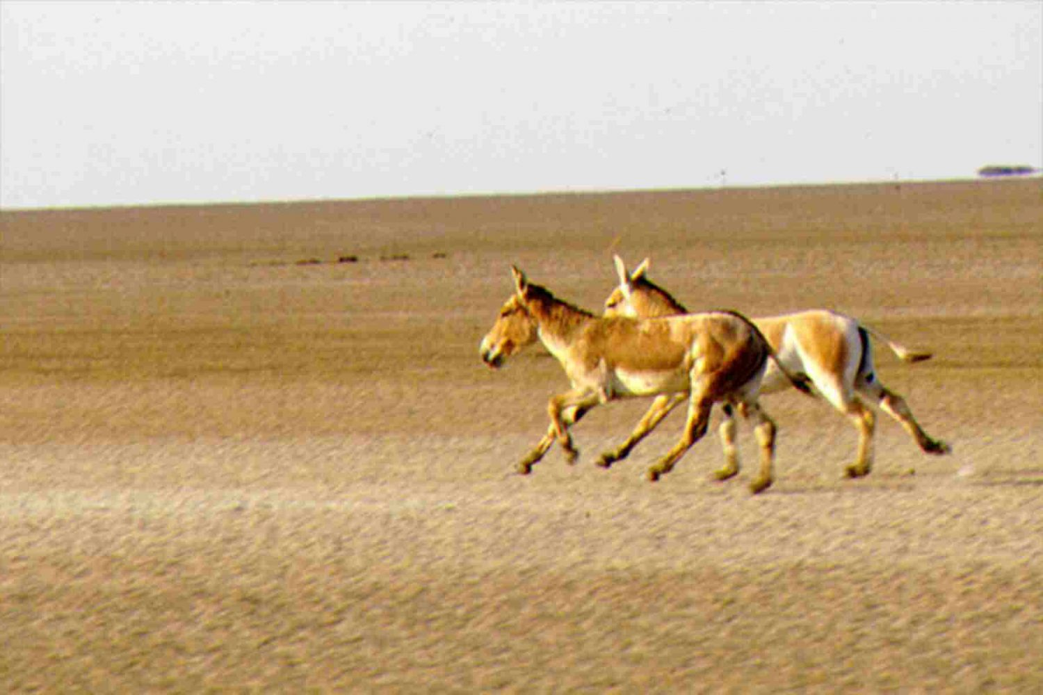 little_rann_of_kutch
