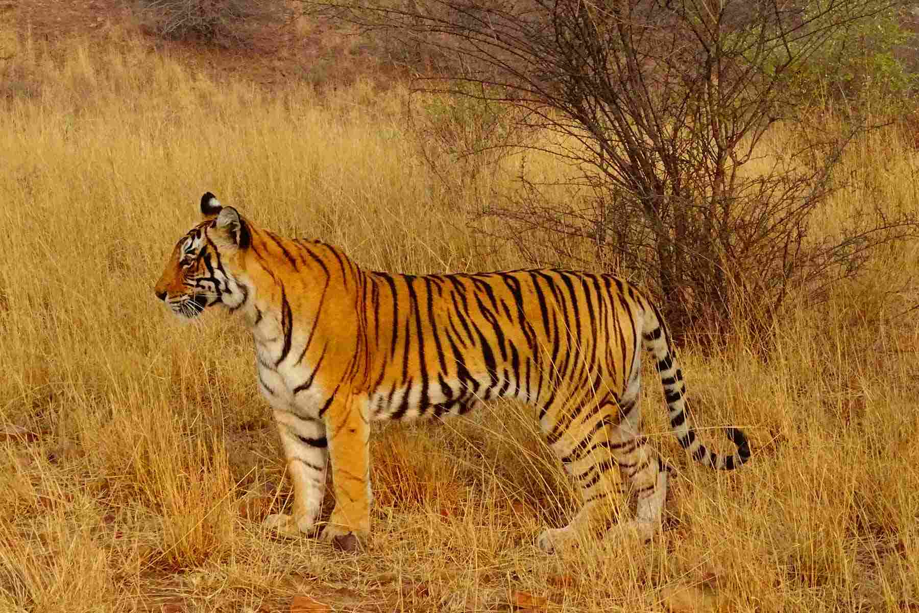 wildlife_in_india